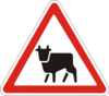 Дорожный знак 1.35 Перегон скота